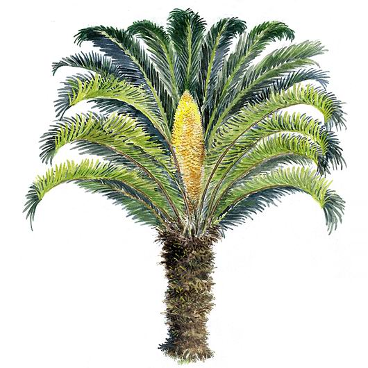 099 -手绘园林植物立面图-zol相册